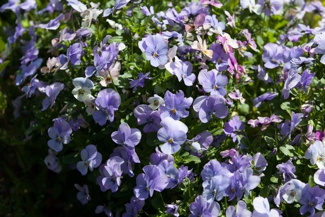Fleur Bleu (Copier) (2)