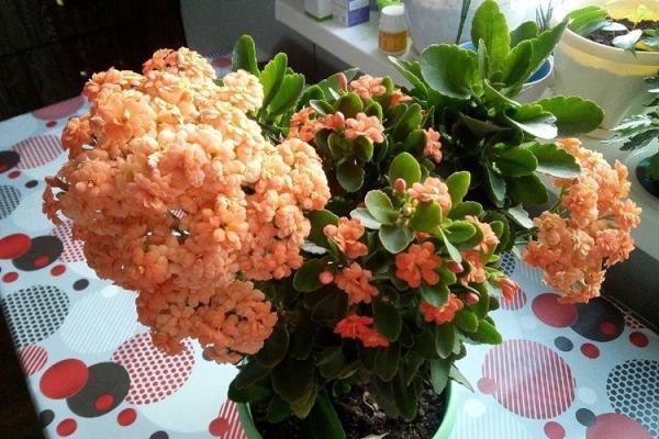 Комнатные цветы - фото и названия, каталог лучших ...