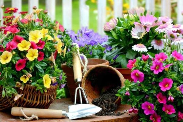 Самые неприхотливые цветы для дачи - фото и названия (каталог)