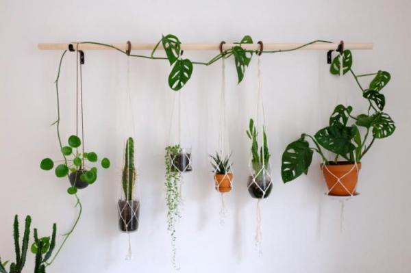 Вьющиеся комнатные растения (80 фото) - названия и виды ...