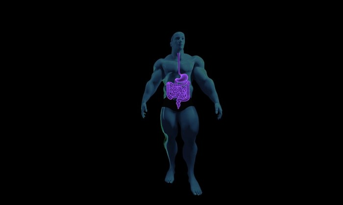 Digestive System, Anatomy, Human Anatomy, 3D, Stomach