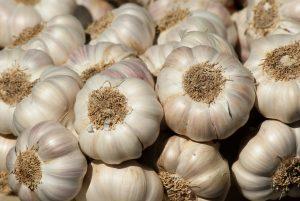 garden, garlic, harvest