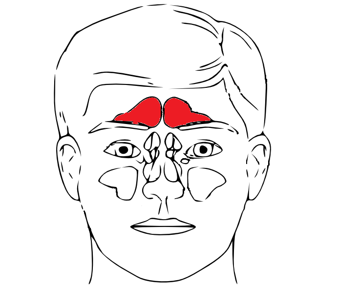 Bestand:Sinus frontalis in red.png