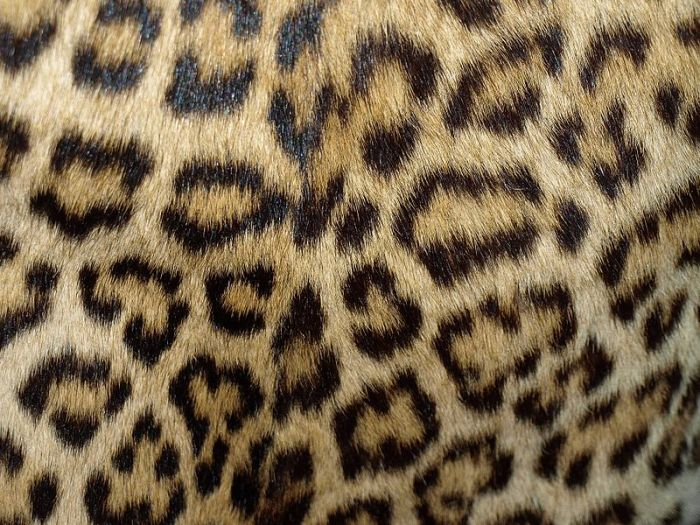File:Leopard coat 1960-70 (4).jpg