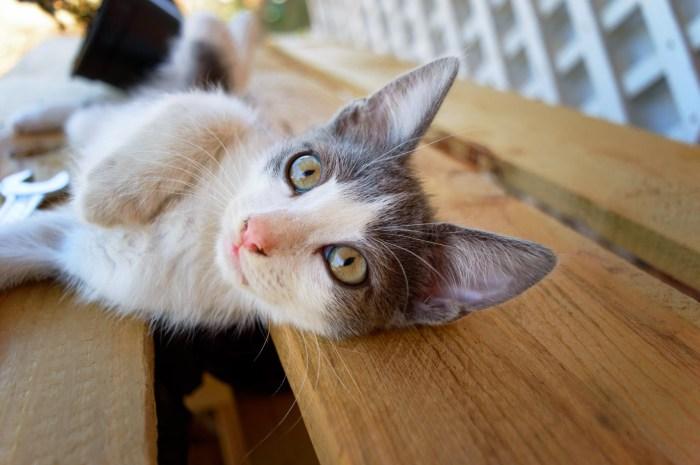 C:\Users\Zubair\Downloads\hair-animal-cute-love-pet-fur-607413-pxhere.com.jpg