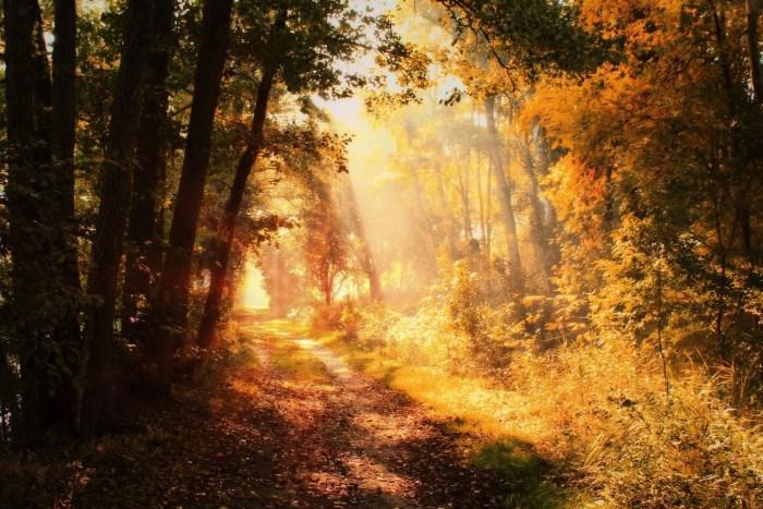 G:\Pics Sharing\autumn-3745034_1920.jpg