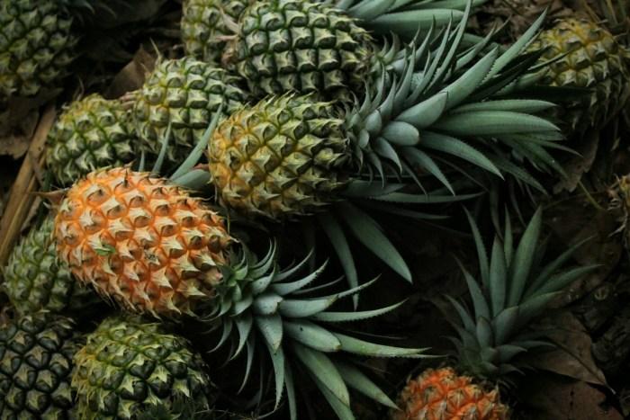 G:\Pics Sharing\pineapple-3808963_1920.jpg