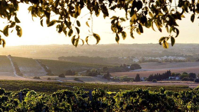 Imagen de unas viñas de Jerez