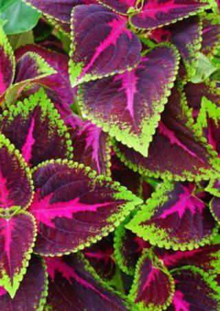 plantes de haie la gamme verte