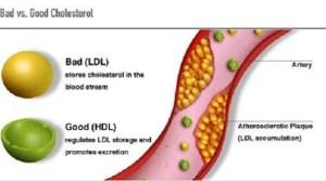 bad-versus-good-cholesterol