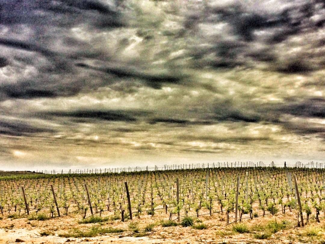 enoturismo, rutas de vino, vinos de madrid, visita bodega, bodega el regajal