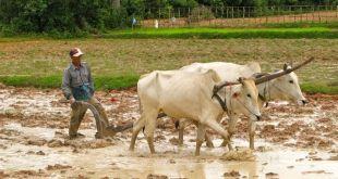 Campos de Siem Reap