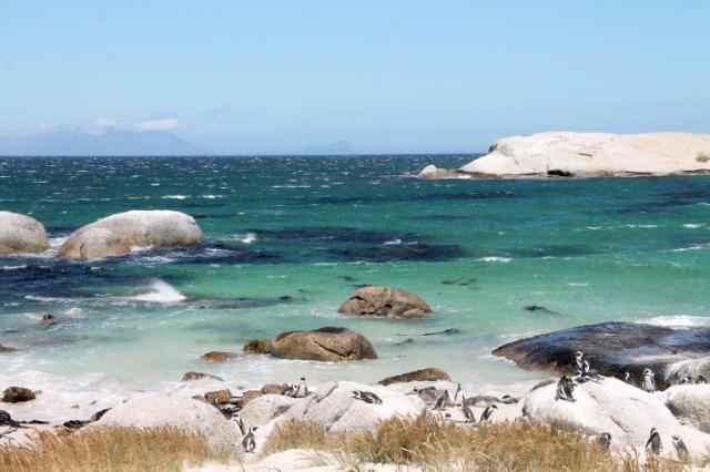 Pingouins sur la plage de Boulder Beach