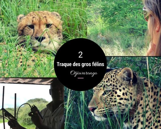 traque felins africat namibie