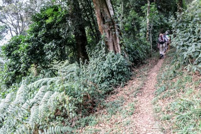 guide survie trekking gorilles Ouganda Afrique