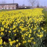 DAFFODILS BY WILLIAM WORDSWORTH..DETAILED REVISION NOTES FOR WAEC/NECO LITERATURE EXAMS (100)