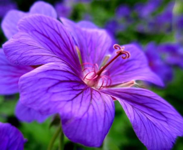 Vuxträff och iris 025