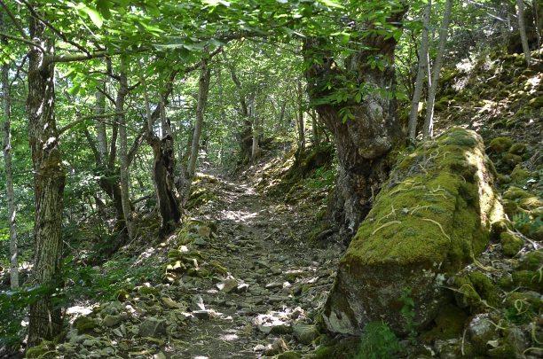 The path upwards