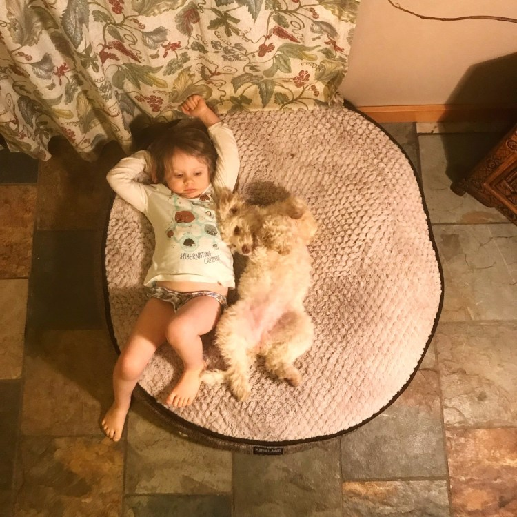 Amico Roma Puppies daughter with lagotto puppy laying together on dog bed