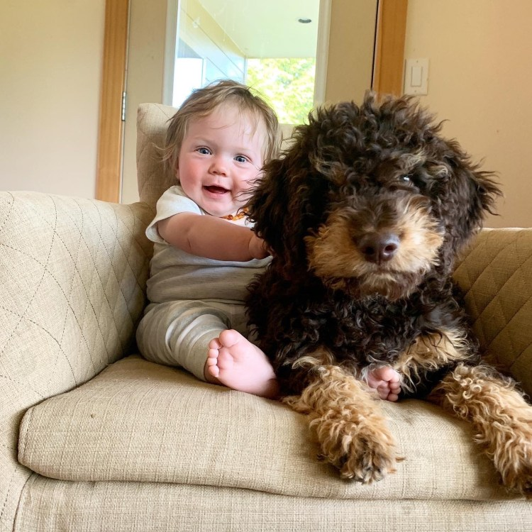 Amico Roma Puppies Lagotto named Stitch with their young son Kai