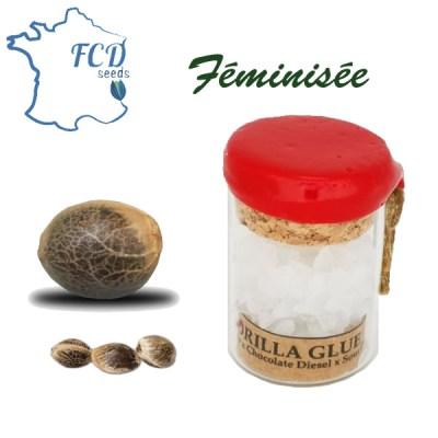 Graines de collection Gorilla Glue féminise