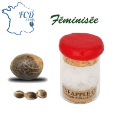 Graine de collection pineapple chunk feminisée