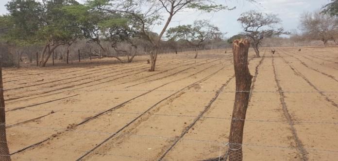 El pozo abastecerá del agua que requiere este cultivo a través de riego o por goteo para que los nativos puedan desarrollar su siembra.