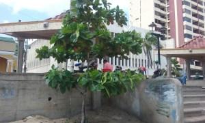 Este es uno de los árboles que sembró Julio Romero Ascanio