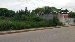 Una situación similar se vive en la carrera 32 del barrio Divino Niño donde se han cometido hasta violaciones en los solares amparados por sus altas malezas.