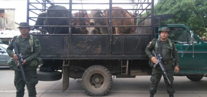 Incautación de seis semovientes que eran transportados en un vehículo tipo camión sin portar la guía de movilización.