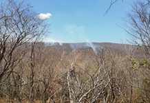 Bosque seco que cuida la multinacional en el departamento y que se encuentra en la periferia del complejo carbonífero.