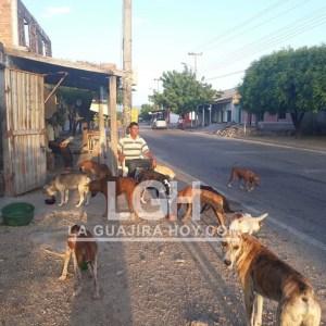 El señor Pitan Martínez también colabora con la alimentación de los caninos.