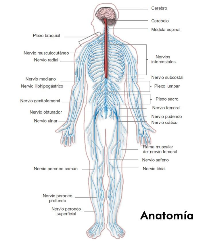 Excelente Anatomía De Una Caldera Ideas - Imágenes de Anatomía ...