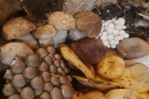 proveedores-hostelería-setas-hongos-restauración-horeca
