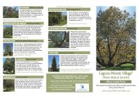 Aliso Creek Tree Guide 11×17″