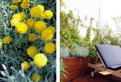 Plantas-de-diseño-05