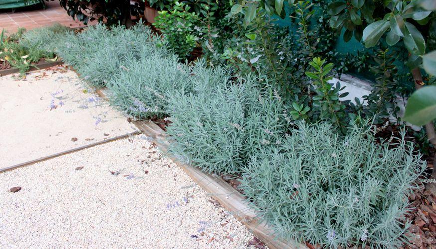 Jardín de aromaticas y grava sin mantenimiento