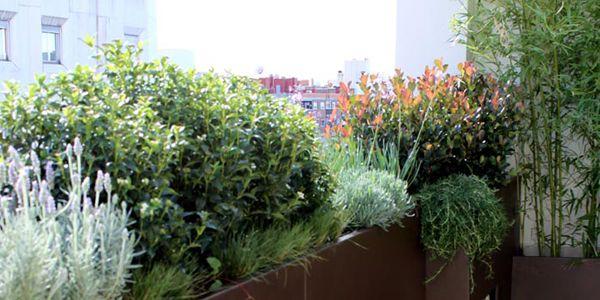 el diseo de jardines aplicado a terrazas y ticos
