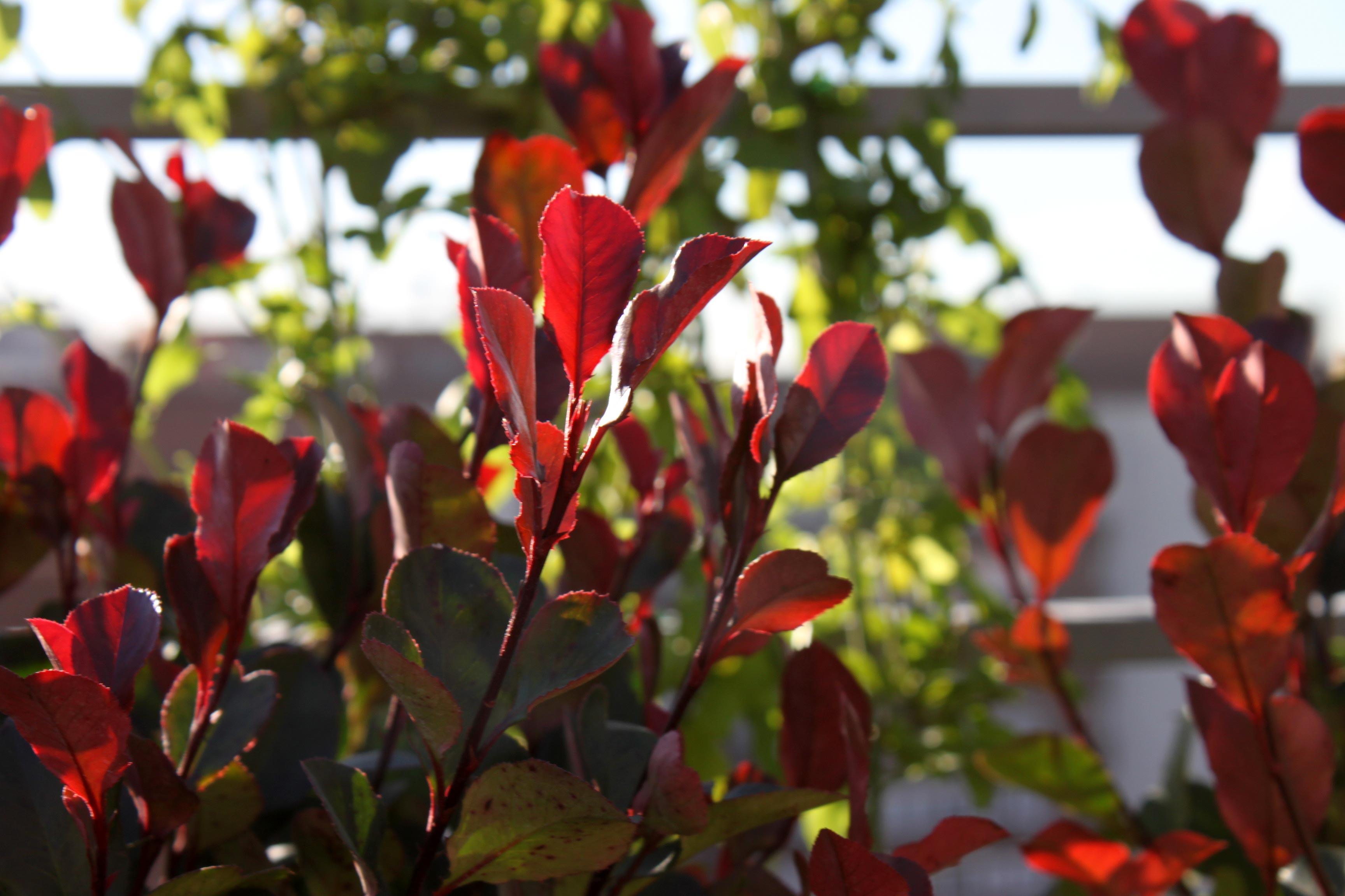 Las 9 mejores plantas para terrazas la habitaci n verde for Plantas de hojas perennes para jardin