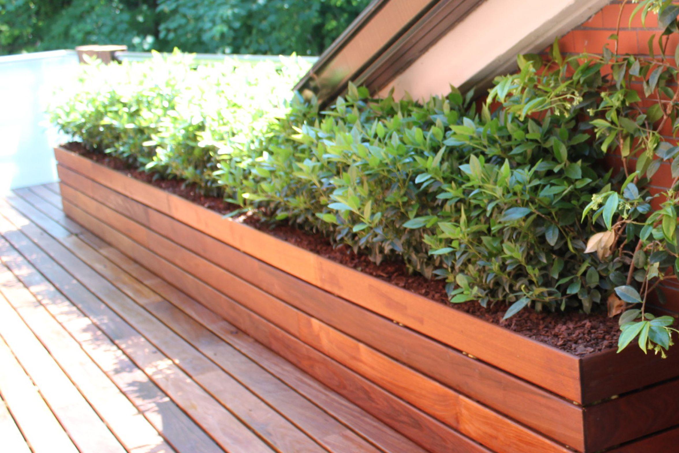 Las 9 mejores plantas para terrazas la habitaci n verde - Decoracion de jardines con plantas ...