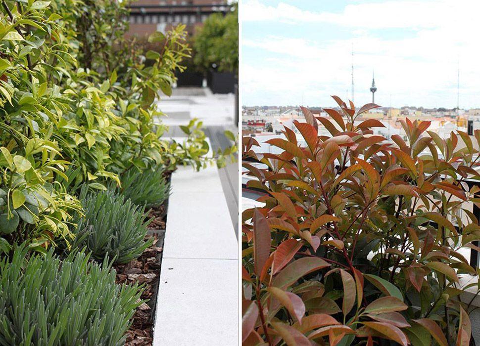 Terraza con Jardín para eventos en Madrid