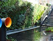 Foto Jardines verticales en oficina en Madrid