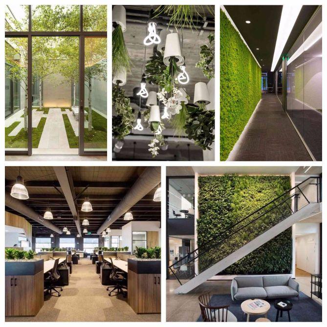Beneficios de un jard n en una oficina la habitaci n verde for Plantas decorativas para oficina