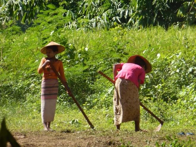 Volontaires entre Hsipaw et Pankam