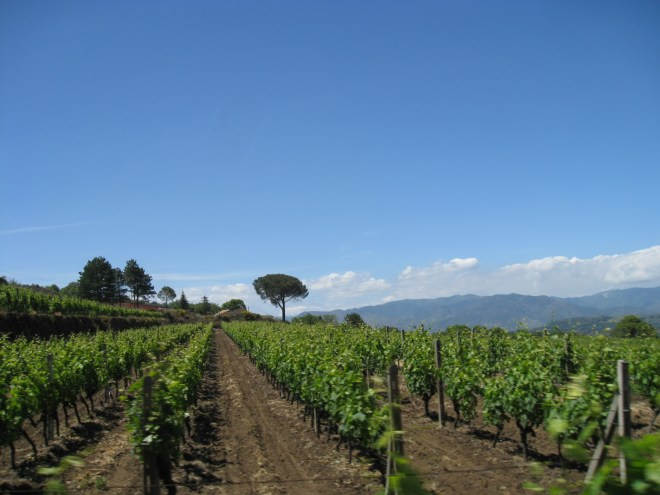 Vignes de l'Etna - Sicile