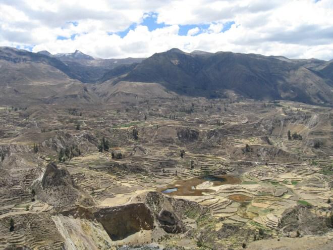 Cultures en terrasses - Canyon del Colca - Pérou