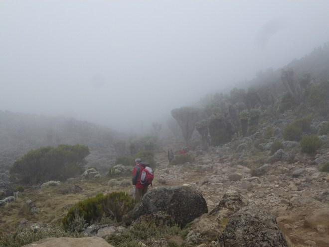 Brume et séneçons avant l'arrivée à Barranco Hut (3940m)