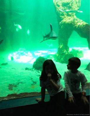 Acuario zoo. Tiburones. Asociación Solidaria La Hora Violeta