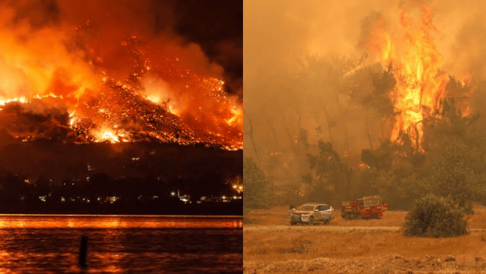 fires in forests