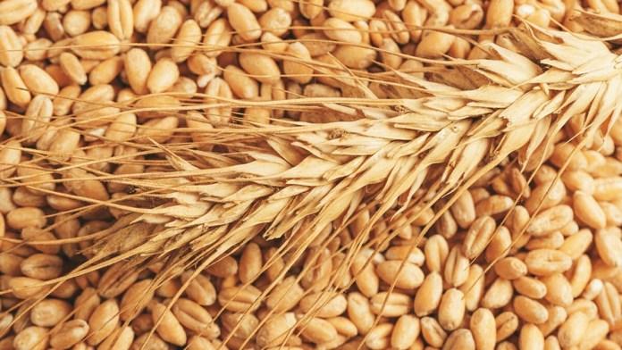 wheat price in pakistan